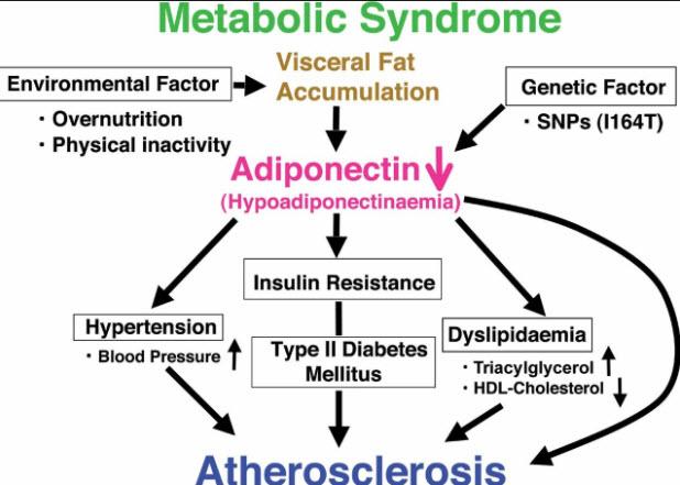 Adiponectin: What Is It? Why Is It Important to You Health?